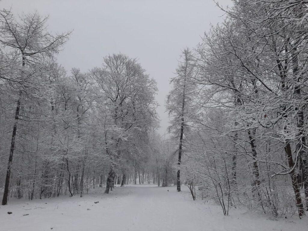Сугорье на согласовании в Петрозаводске